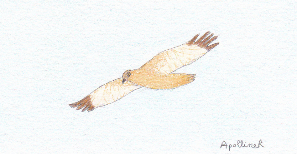 drawing of migratory bird flying